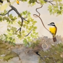 great-kiskadee-and-tropical-parula-graphite-ink-colored-pencil-gouache-and-watercolor-wash-2009