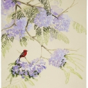 vermillion-flycatcher-44x33-graphite-ink-colored-pencil-gouache-and-watercolor-wash-2009