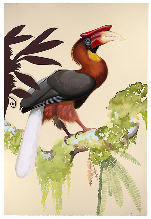 David Tomb. Rufous Hornbill, 2012. 44 x 30, Watercolor, gouache on paper
