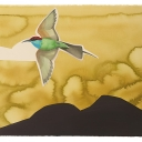 David Tomb. Blue-throated Bee-eater, 2012.22 x 30 Watercolor, gouache on pape