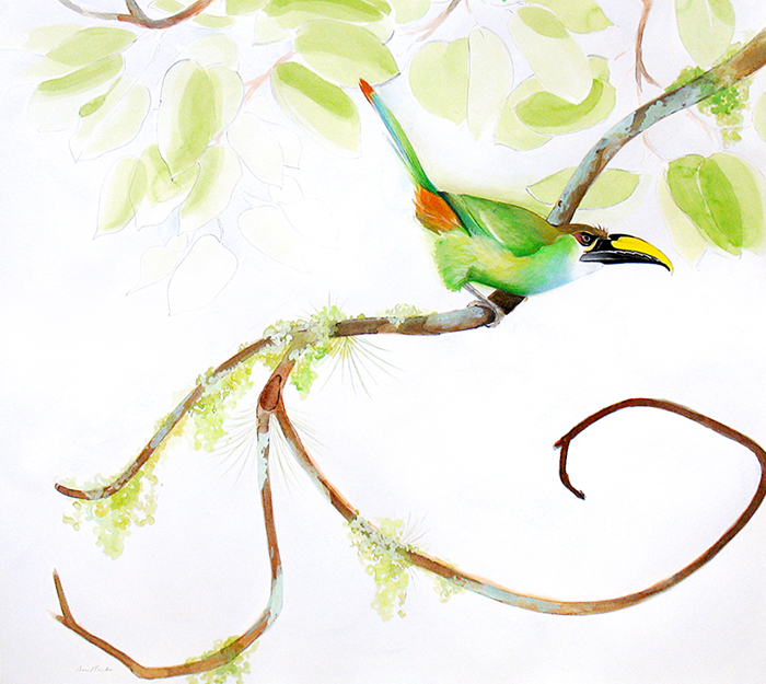 emerald-toucanet-25x30-graphite-ink-colored-pencil-gouache-and-watercolor-wash-2007-2008