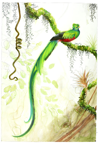 resplendent-quetzal-44x30-graphite-ink-colored-pencil-gouache-and-watercolor-wash-2007-2008