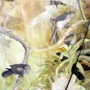 barred-forest-falcon-2008-gouache-watercolor-colored-pencil-graphite-on-paper-60x44