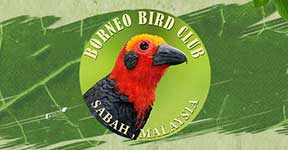 Borneo Bird Club
