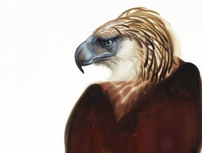 "David Tomb, ""Great Philippine Eagle"""