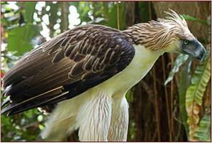 eagle, ian