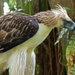 eagle, ian,f