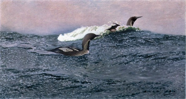 Loons, oil on canvas