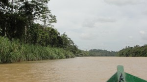 Heading up the Kinabatangan