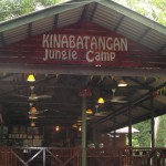 Kinabatangan Jungle Camp, feat