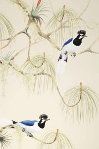 Tufted Jays, by David Tomb