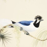 tufted jay-featured