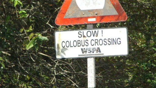 Colobus Crossing
