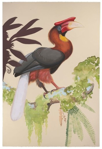 Rufous Hornbill by David Tomb