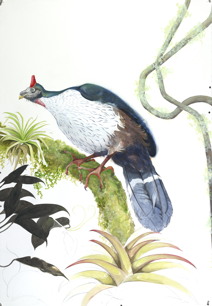 Horned Guan, by David Tomb
