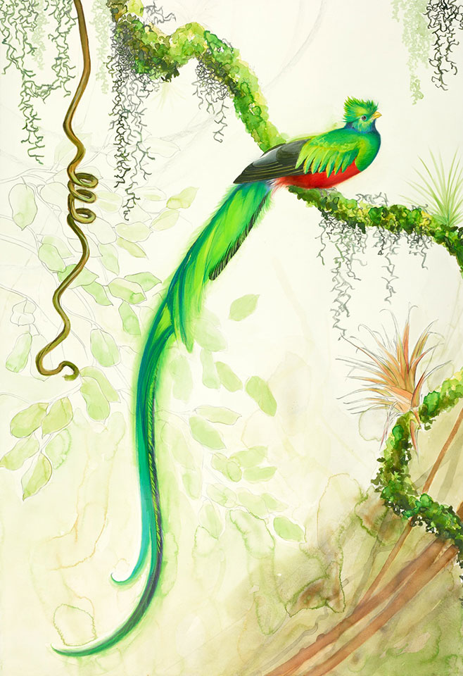 Resplendent Quetzal, by David Tomb