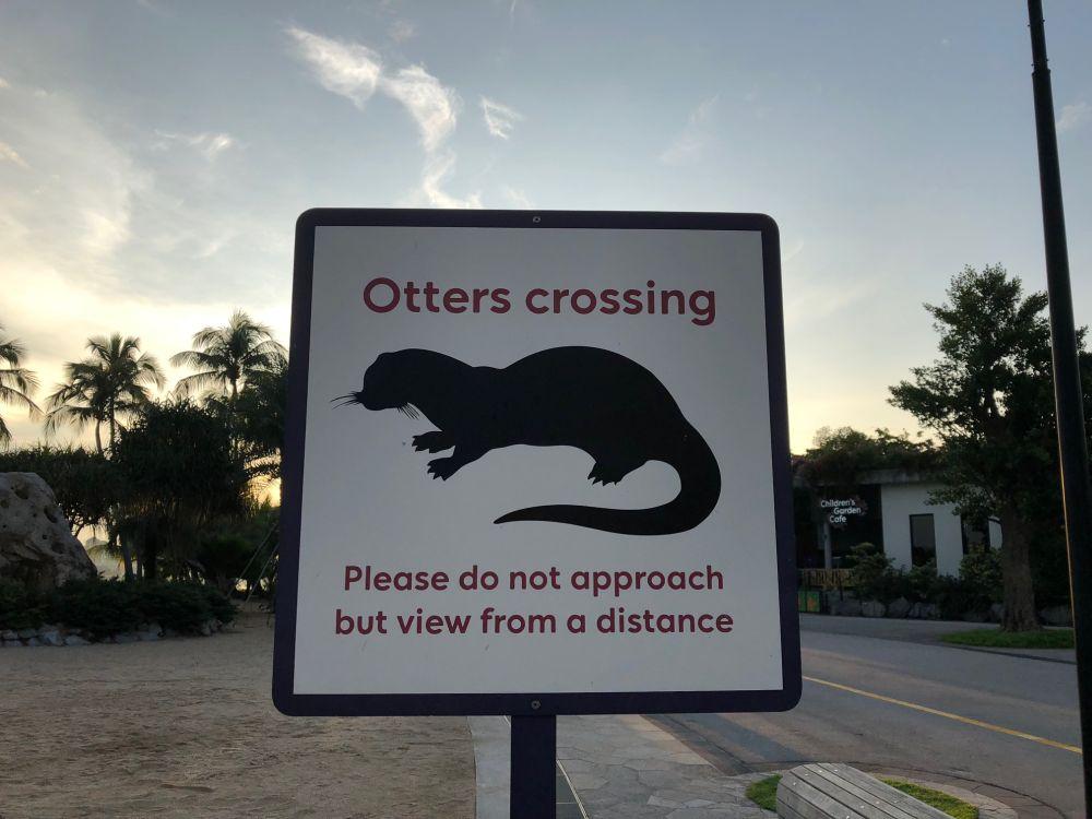 sing_otter